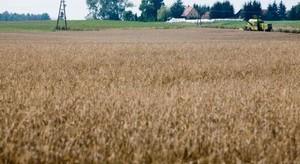GPW planuje wejście na rynek rolny