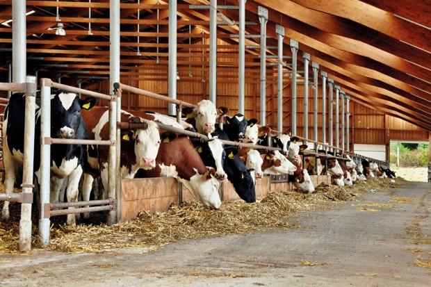 Rynek mleka: W standardzie bez GMO