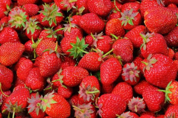 Skup truskawek: Wyższy popyt na owoce do mrożenia niż na koncentrat