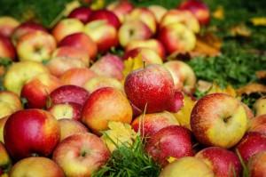 Rozmowy wiceministra rolnictwa w Waszyngtonie o polskim eksporcie