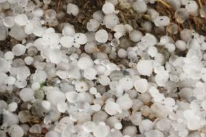 Straty w rolnictwie z powodu klęsk żywiołowych to 316 mln zł