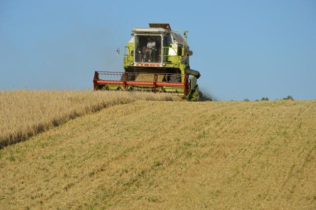 Organizacje rolnicze publikują prognozy zbioru zbóż