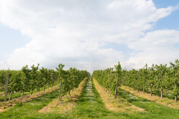 Kazachstan zainteresowany polskimi technologiami i współpracą w sektorze rolniczym