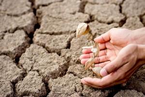 Coraz więcej obszarów Polski zagrożonych jest suszą rolniczą