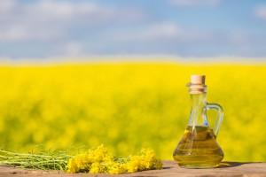 PSPO: W I połowie 2017 r. tłocznie oleju przerobiły prawie 1,14 mln ton nasion rzepaku