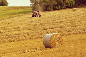 W woj. podkarpackim ma powstać strategia rozwoju rolnictwa i obszarów wiejskich