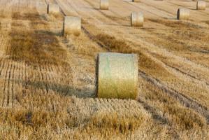 W Rosji zebrano ponad 22 mln ton zbóż