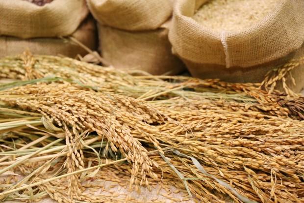 Resort rolnictwa: Import zbóż z Ukrainy jest na bieżąco monitorowany