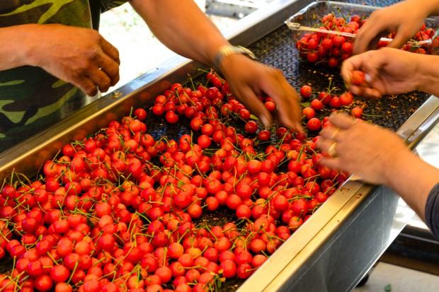 Przetwórstwo owocowo-warzywne i gastronomia z miejscami pracy dla Ukraińców