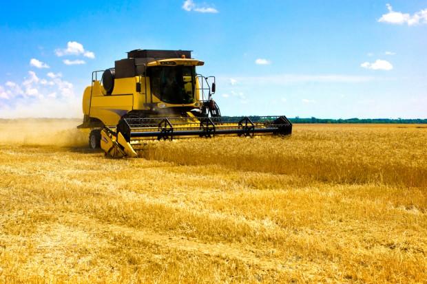 ARR: Plony zbóż w 2017 r. na poziomie z poprzedniego roku, a zbiory o 0,2 mln ton wyższe