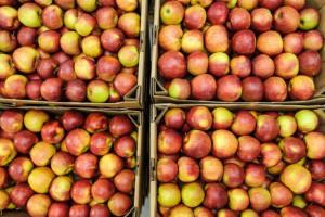 Rynek jabłek trzy lata po wprowadzeniu embarga Rosji - podsumowanie