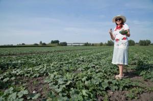 Zdjęcie numer 3 - galeria: Gospodarstwo Rolne M. Sznajder: Kiszonki znów są postrzegane jako bardzo zdrowa żywność, superfoods (wideo)