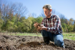 Resort rolnictwa myśli o zmianie systemu ubezpieczeń rolnych