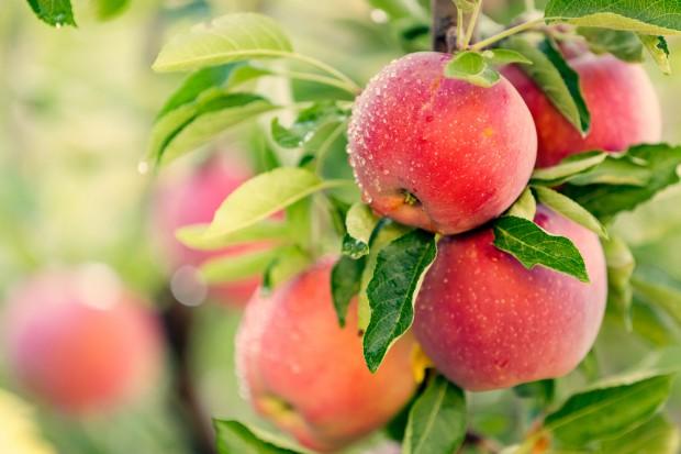 Pełny efekt niższych zbiorów owoców zobaczymy na przełomie III i IV kwartału