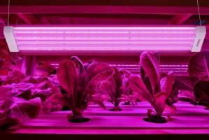 Światło jest kluczowe dla uprawy roślin