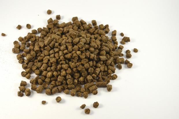 Branża olejowa: Śruta rzepakowa to dobre źródło białka paszowego