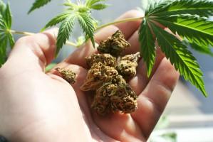 Producent marihuany kupił miasto w Kalifornii