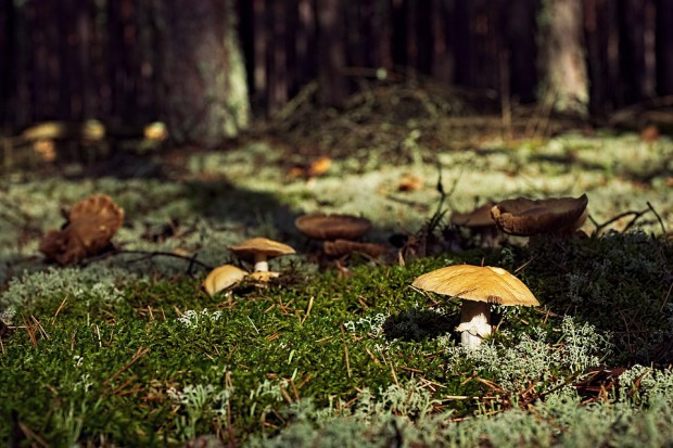 Lekarze apelują:aby zbierać tylko takie grzyby, które dobrze znamy
