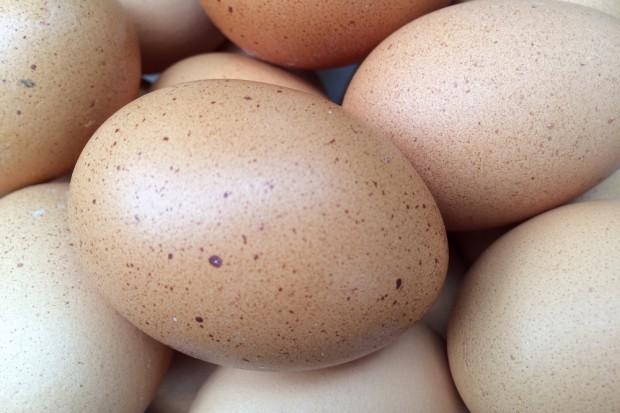 W Holandii zarządzono kontrole ferm jaj i drobiu