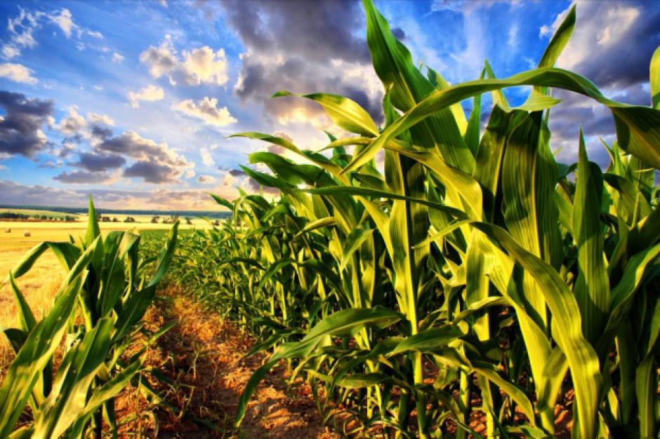 IUNG: W kraju nie ma suszy rolniczej