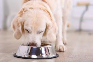 Nestlé Purina pozwala pracownikom biura w Warszawie przychodzić z psami