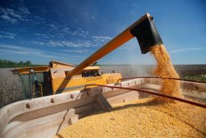 Rosja zwiększyła produkcję rolną