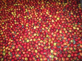 Rynek jabłek: Mniejsze zbiory wcale nie muszą oznaczać wzrostu cen