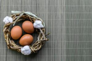 Holandia: Skandal z fipronilem dotknął także producentów ekologicznych jaj