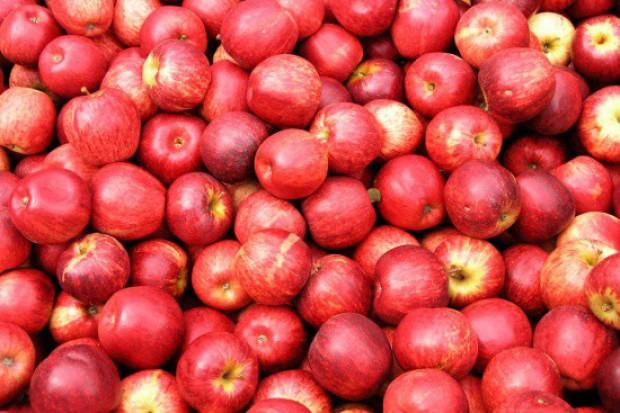 Rosną ceny jabłek przemysłowych