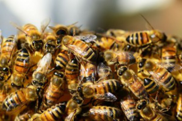 Greenpeace rozpoczyna prace nad narodową strategią ochrony polskich pszczół