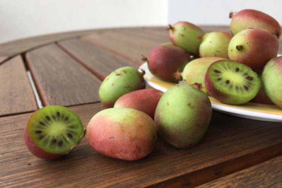 Kiwi w wersji convenience - nowe owoce mają szansę podbić europejski rynek