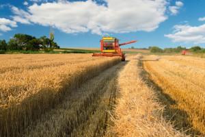 KFPZ: Zebrano większość zbóż