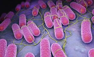 Sanepid wyjaśnia sprawę kolejnego zatrucia salmonellą