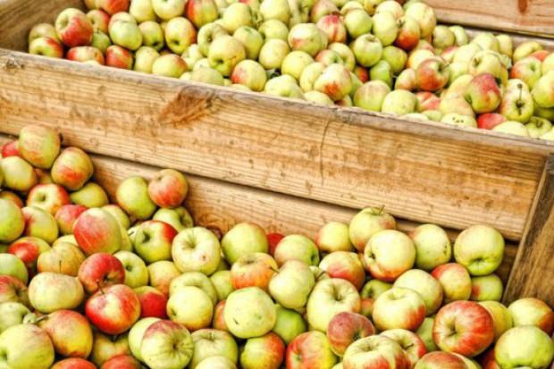 Skup jabłek przemysłowych: Wysokie ceny mogą doprowadzić do załamania rynku
