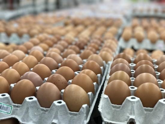 Sieciowa półka nie dla jaj klatkowych. Kto zapłaci za lepszy dobrostan zwierząt? - analiza