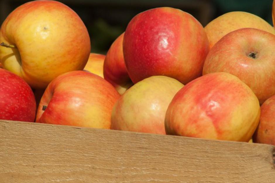 Niższe zbiory jabłek w Niemczech. Zainteresowanie importem może wzrosnąć