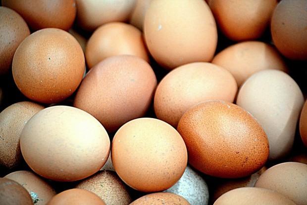 Producenci jaj z fipronilem ucierpieli głównie wizerunkowo