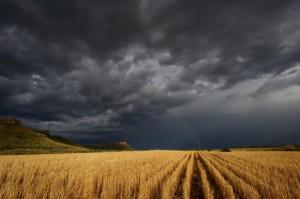 MRiRW: ok. 8,5 tys. gospodarstw i 72 tys. ha upraw zniszczonych przez nawałnicę
