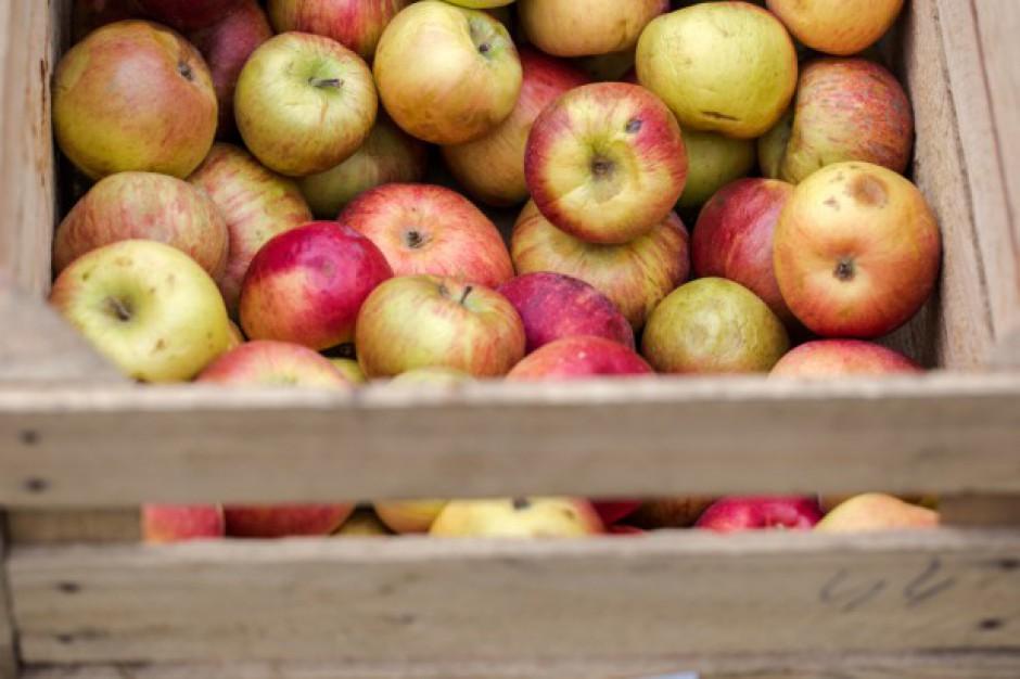 Możliwe są spadki cen jabłek przemysłowych