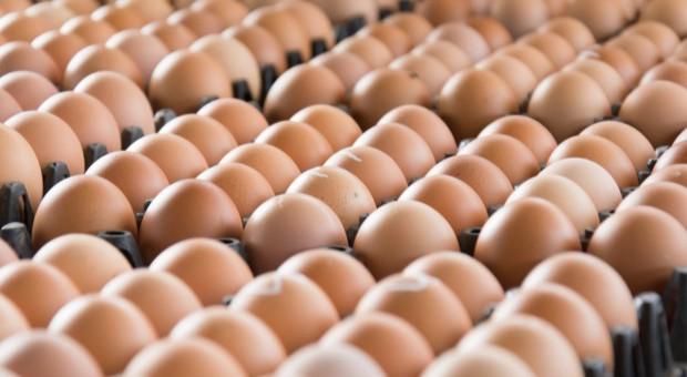 """Czy polscy producenci jaj skorzystają na """"aferze fipronilowej�? - analiza"""