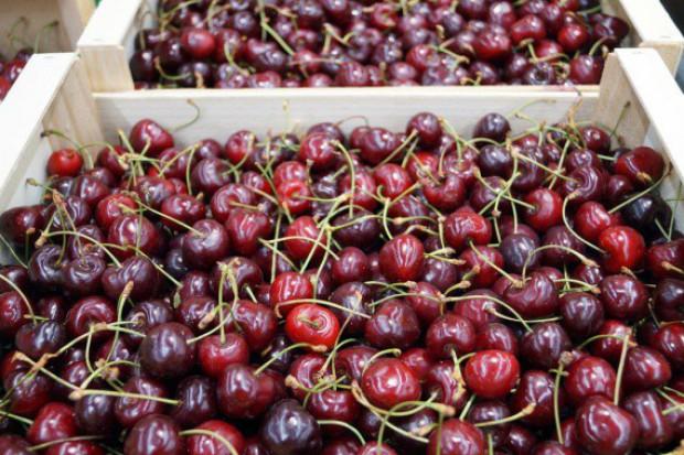 Produkcja owoców pestkowych na Ukrainie będzie znacznie niższa niż przed rokiem