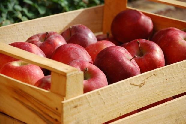TRSK: Zbiory jabłek w Polsce będą niższe o 25 proc. rdr
