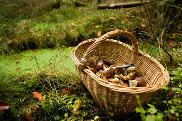 Ministerstwo Zdrowia chce rozszerzyć wykaz grzybów dopuszczonych do sprzedaży