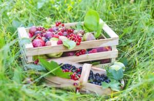Już nie tylko jabłka. Sadownicy stawiają nadywersyfikację produkcji