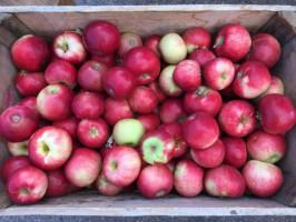 Polscy konsumenci są zaskoczeni cenami owoców