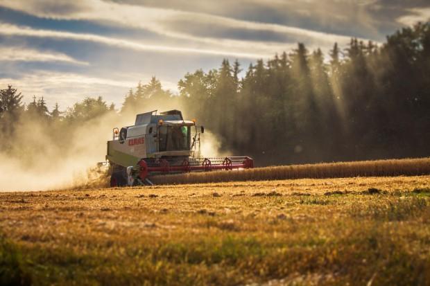 USDA: Produkcja zbóż w sezonie 2017/2018 w Polsce wyniesie 31,9 mln ton