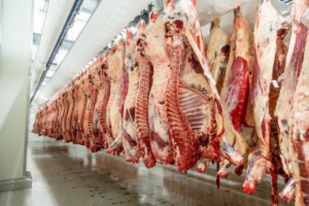 Rosną ceny skupu żywca wołowego