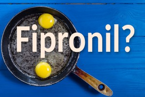 Prawie pół mln jaj z fipronilem wycofano z bułgarskiego rynku