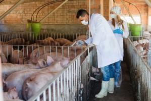 Niemieccy weterynarze zmniejszyli o połowę ilość stosowanych antybiotyków
