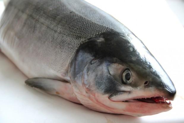 Global Fish rozwija hodowlę łososia